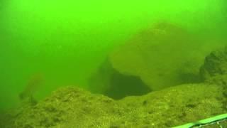 メコン川 上流 水中動画の鯉・各種の魚