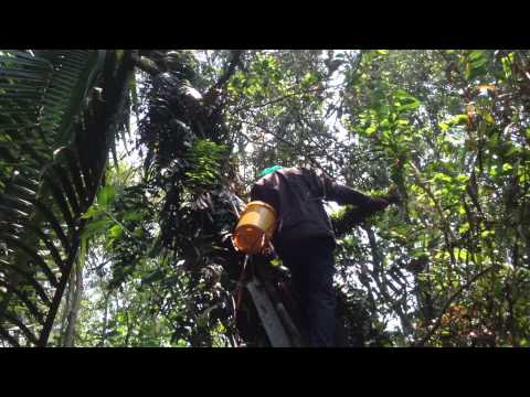 cảnh lấy mật ổ ong rừng 10lit