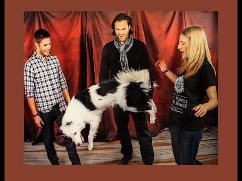 Dog Tricks with Misha Collins @ 2014 Toronto Supernatural Convention!