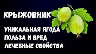 Крыжовник Уникальная Ягода Польза и Вред Лечебные Свойства