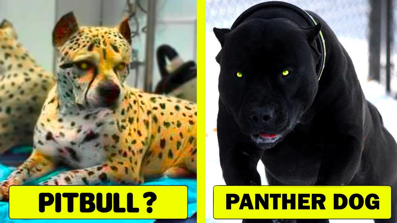 15 Rarest Dog Breeds in the World