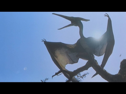 'Pterodactyl' seen in sky over Alaska