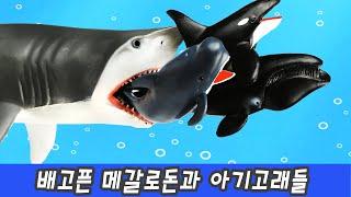 한국어ㅣ배고픈 메갈로돈과 아기고래들, 고래이름 맞추기, 어린이 고래동화, 컬렉타ㅣ꼬꼬스토이