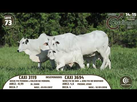 LOTE 73   CAXI 3694, CAXI 3119