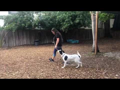 Charlie | Training Around Other Dogs