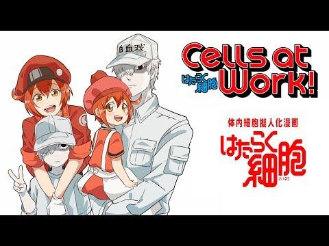 Hataraku Saibou - Cells At Work - En La Opinión De #PhilElMago