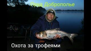 Ловля толстолоба и карпа с Доброполье Харьковская область