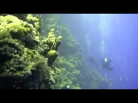 Al Lith Dive Expedition Youtube