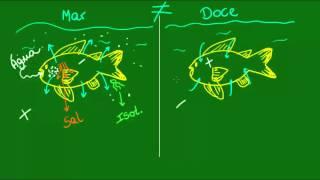 Osmorregulao dos peixes - Vertebrados - Biologia