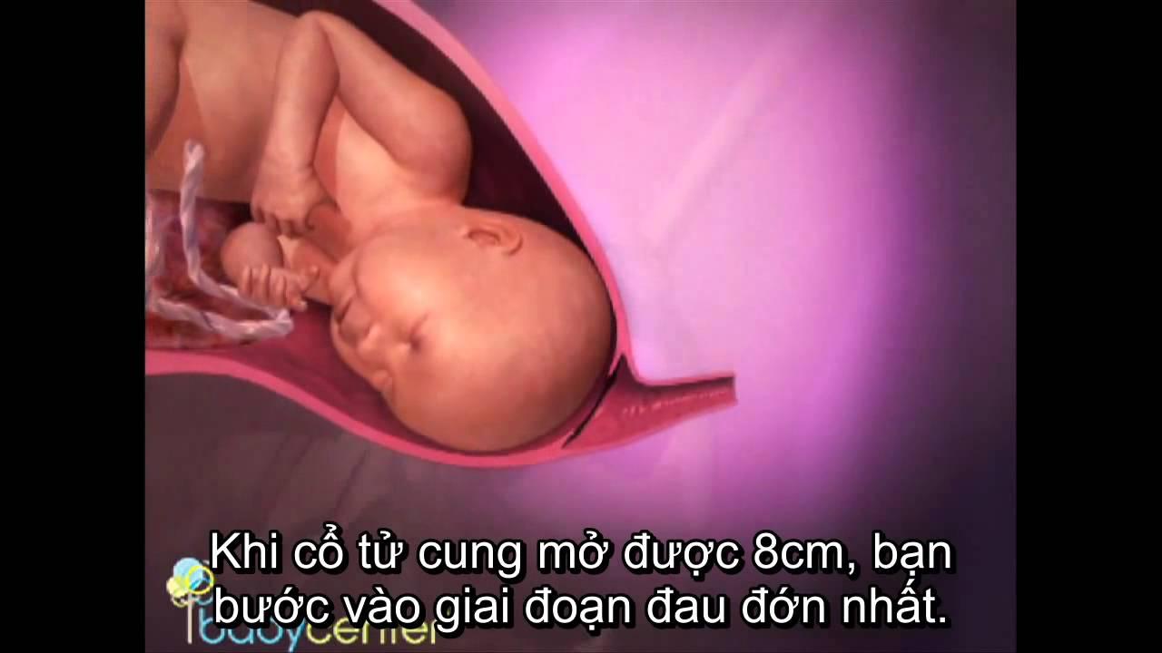Video Hành trình kì diệu từ tuần thai thứ 37 38 aFamily