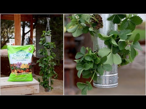 build-your-own-vertical-strawberry-planter-fast-version