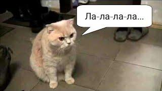 Котики поют/Поющие коты/Смотреть всем)))