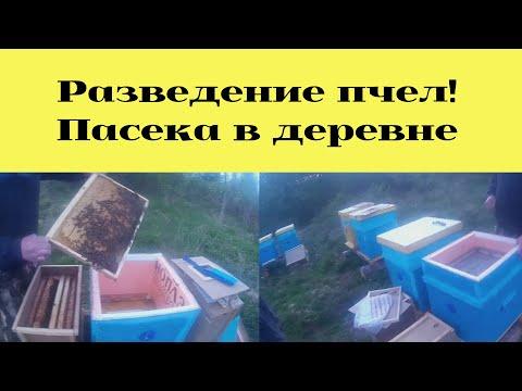 Пасека в деревнеПасека соседа ЛёхиПоездка за пчеламиРазведение пчел