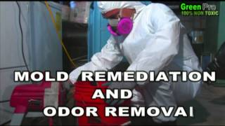 Best Mold Removal Mold Remediation Clearwater Fl