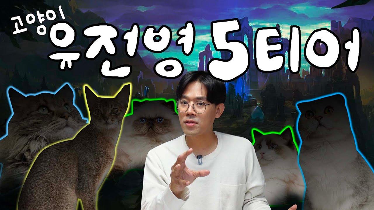 sub)김명철 수의사가 본 가장 무서운 '고양이 유전질환' 5가지