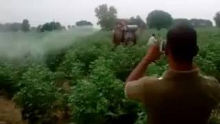 New style agriculture equipment. Farming by Camel in India