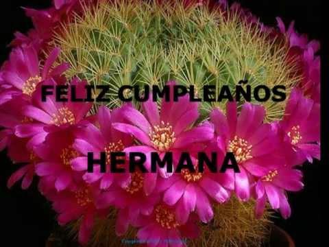 Rosas Para Una Flor Mp4 Youtube