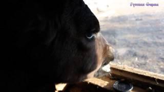 Гектар ест хлеб и смотрит в окно