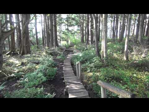 Cape Flattery Trail, near Neah Bay Washington