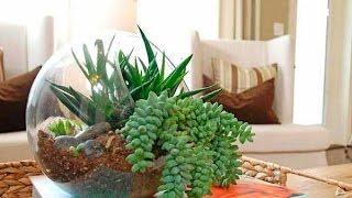 флорариум обустройство и подбор растений