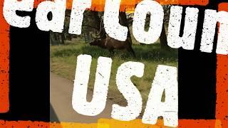 Bear Country USA South Dakota Tourist Attraction