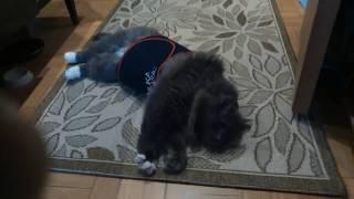 Кот худеет !!!