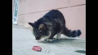 Чего только в жизни не бывает. Кошка у которой косят глаза🕶 #кошачийглаз #кошка #люблюкошек