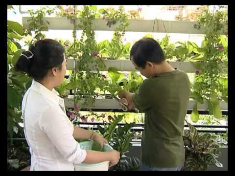 Huy Chương Vàng 2 – Giải Pháp trồng rau sạch tại nhà