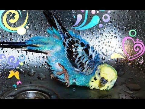 Соня и Полина в гостях у СПАНЧ БОБА Щенячий Патруль и Робокар Поли ищут крабсбургер Видео для детейиз YouTube · С высокой четкостью · Длительность: 4 мин41 с  · Просмотры: более 17000 · отправлено: 18/12/2016 · кем отправлено: Игромультик