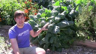 How to Grow Brussel Sprouts - Complete Growing Guide