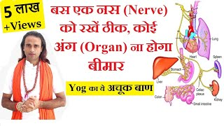एक Vegus Nerve देगा Complete Health   Physical Mental Wellness   Yogaguru Dheeraj