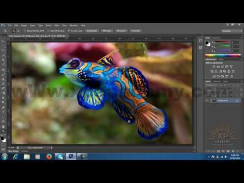 Photoshop CS6 URDU Tutorials