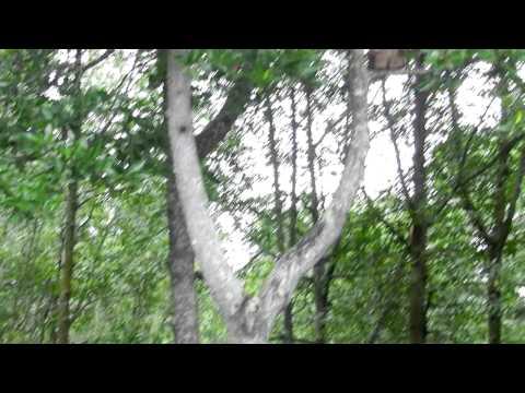 Mangrove Park @ Seri Manjung,Perak