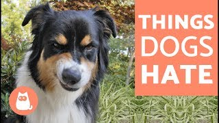 10 things dogs HATE about humans