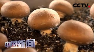[中国新闻] 中国农业农村部:31省份均已发布省级乡村振兴战略规划 | CCTV中文国际