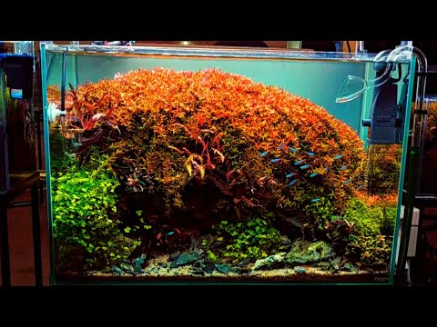 Best Aquascape Natural Style  In 2019 | Photo Galery Nusatic 2019 | Aquascape Exhibition