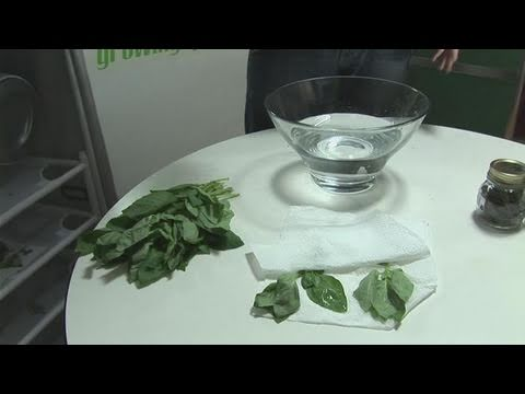 How To Dry And Store Basil