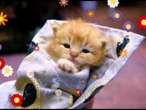Bonne fete chante par chats