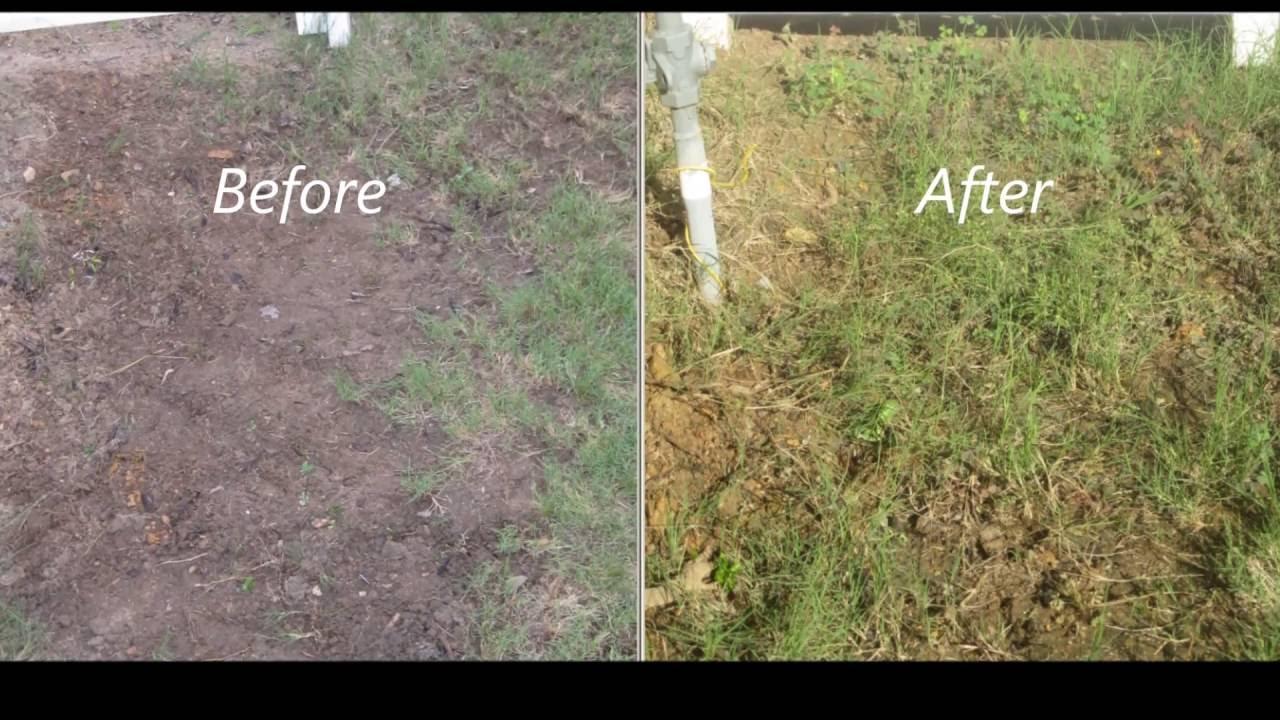 maxresdefault - How Do I Get My Bermuda Grass To Thicken Up