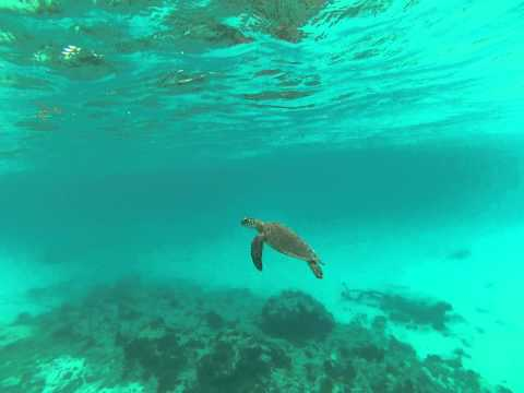 Sea Turtle at Prickly Pear Cay