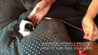 HOW TO TUBE FEED A PUPPY; FADING PUPPY SYNDROME; PUPPY WONT EAT; SAVE PUPPIES LIFE; MANMADE KENNELS
