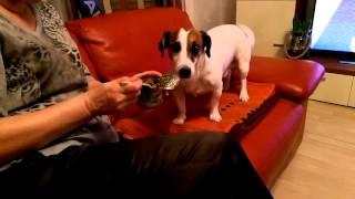 Wie futtert man ein Hund. Как правильно кормить собаку.