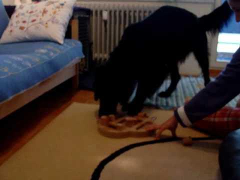 Bajk et Dog Fighter de Nina Ottosson