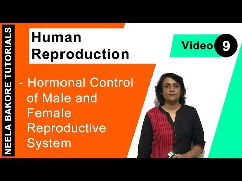 Human Reproduction - Hormonal Control Of Male And Female Reproductive System