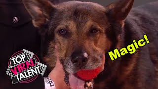 This CUTE POLICE DOG WOWS the Judges with a SURPRISING MAGIC TRICK!