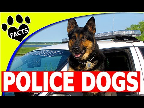 Service Dogs: Top 10 Police Dog Breeds Around the World Cop Dogs - Animal Facts
