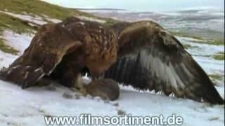 Schulfilm: ULTIMATE GUIDE - ALLES ÜBER RAUBVÖGEL (DVD / Vorschau)