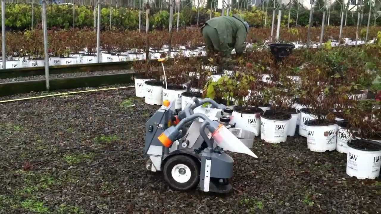 Image result for netherland robotic greenhouse