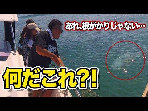 【船釣り】驚愕!!海底から迫りくる巨大な白い影!!
