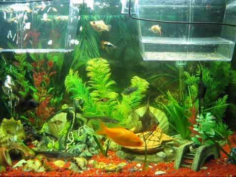 pesci tropicali bellissimi youtube